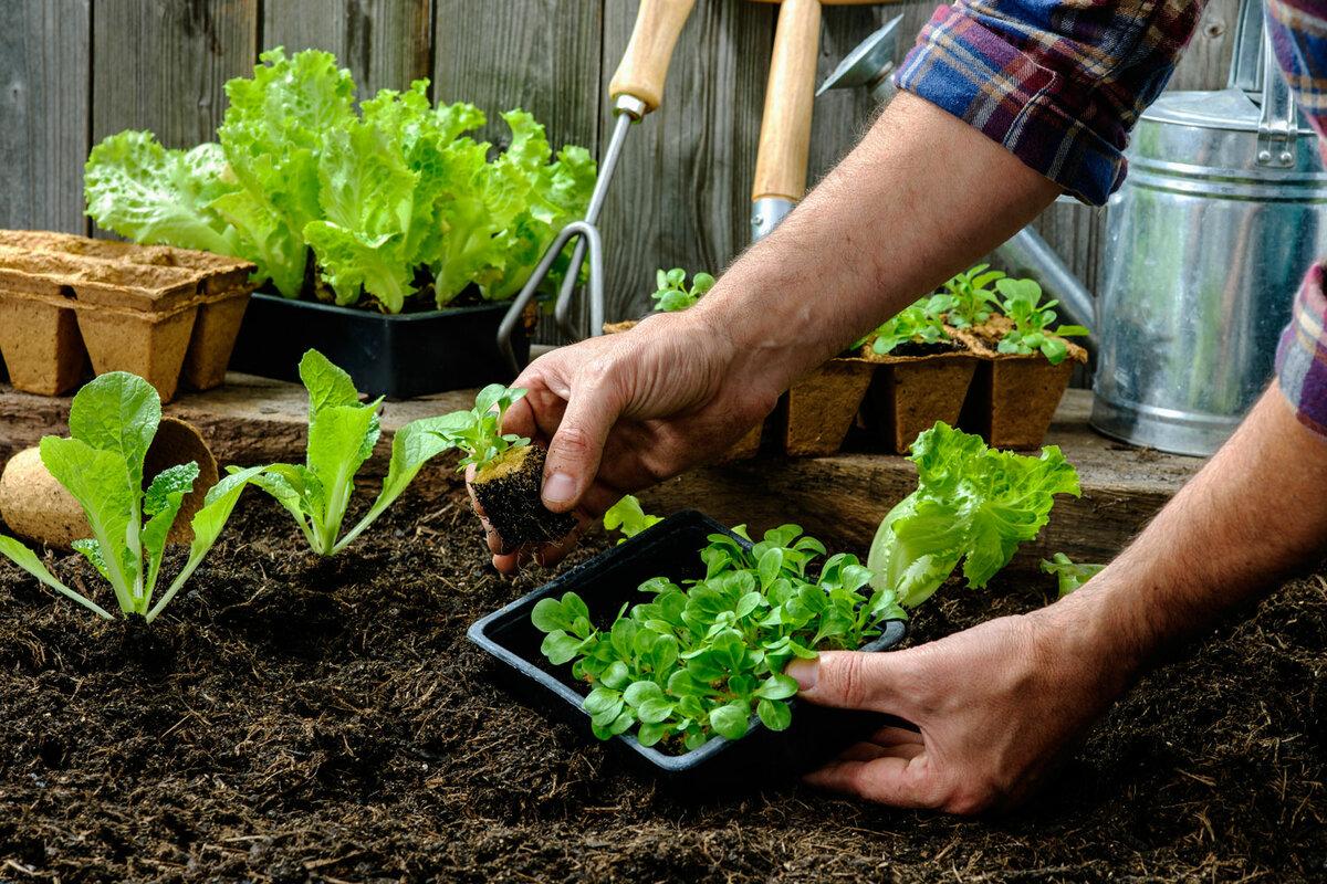 Как правильно выращивать овощи